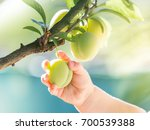 cute baby touching some peaches ... | Shutterstock . vector #700539388