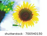 the sunflower yellow color was... | Shutterstock . vector #700540150