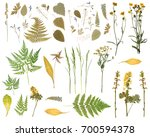Pressed Dried Herbarium Of...