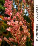 Small photo of gorgeous flowers astilbe in the garden
