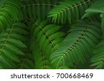 green leafy plant | Shutterstock . vector #700668469