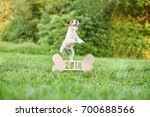 happy wire fox terrier dog... | Shutterstock . vector #700688566