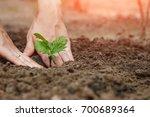 women's hands put a sprout in... | Shutterstock . vector #700689364
