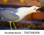 Small photo of Angry Seagull