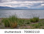 Small photo of Mongolian natural landscapes with bushes of grass Achnatherum near lake Tolbo-Nuur in north Mongolia.