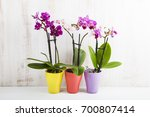 three orchids in pots on a... | Shutterstock . vector #700807414