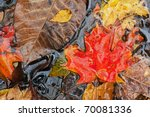 Autumn Leaves Floating On Pond...