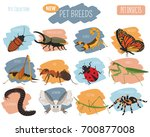 pet insects breeds icon set... | Shutterstock .eps vector #700877008