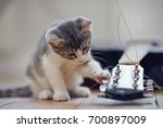 Stock photo a curious kitten and the guitar lying on a floor 700897009