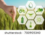 woman touching wheat spikelet... | Shutterstock . vector #700905340