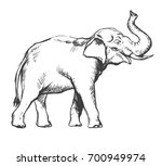 african elephant sketch drawing | Shutterstock .eps vector #700949974