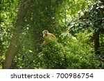 little monkey on the tree | Shutterstock . vector #700986754