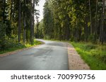 Forest Road In The Forest...