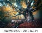 fairy tree in fog. old magical... | Shutterstock . vector #701056354