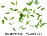 green leaves  leaf branches on... | Shutterstock . vector #701089384