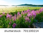 the flowers of willow herb... | Shutterstock . vector #701100214