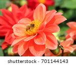 Orange Red Flower With Bee