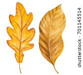 fall leaves. autumn season... | Shutterstock . vector #701145514