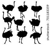 set of ostrich full length... | Shutterstock .eps vector #701183359