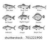 set of hand drawn fish. sketch...   Shutterstock .eps vector #701221900