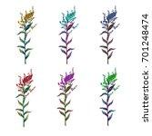 set  variation solidago | Shutterstock . vector #701248474