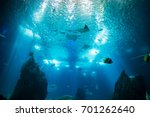 ocean giant fish world in... | Shutterstock . vector #701262640