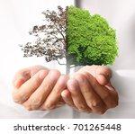 human hands holding a tree... | Shutterstock . vector #701265448