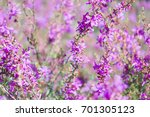 amazing floral background of... | Shutterstock . vector #701305123
