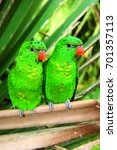 two scaly breasted lorikeet ... | Shutterstock . vector #701357113
