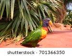 rainbow lorikeet  trichoglossus ... | Shutterstock . vector #701366350
