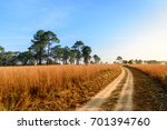 dirt road at thung sa lang... | Shutterstock . vector #701394760