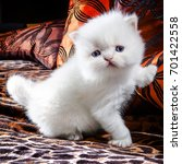 white kitten | Shutterstock . vector #701422558