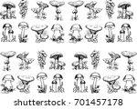 edible mushrooms.hand drawn... | Shutterstock .eps vector #701457178