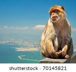 Monkey In Gibraltar