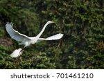 great white egret in mating... | Shutterstock . vector #701461210