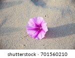 Pink Flower On The Ground Sand
