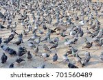 pigeons on the square | Shutterstock . vector #701560489