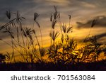 silhouette of flower and grass... | Shutterstock . vector #701563084