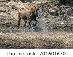 wild horses | Shutterstock . vector #701601670