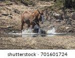 wild horses | Shutterstock . vector #701601724
