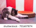 cat is licking fur pet behavior ... | Shutterstock . vector #701607874