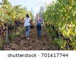 two women friends harvesting... | Shutterstock . vector #701617744
