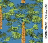 vector drawn fan palm tree... | Shutterstock .eps vector #701667820