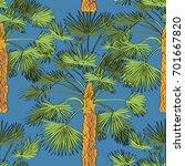 vector drawn fan palm tree... | Shutterstock .eps vector #701667820