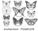 butterfly collection ... | Shutterstock .eps vector #701681239