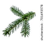 fir branch on white background | Shutterstock . vector #701693578