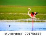 Colorful Bird Flamingo. Blue...