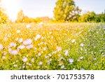 beautiful meadow with flowers... | Shutterstock . vector #701753578