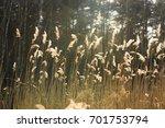 wild grass reflecting sunset... | Shutterstock . vector #701753794