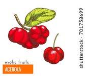 acerola cherry. full color... | Shutterstock .eps vector #701758699